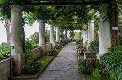Villa San Michele (JPClarke_FAIA) Tags: gardens capri europe villasanmichele