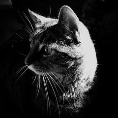 Touched By The Light! (LiesBaas) Tags: ilovemycat cat kater themick mickie touchedbythelightbyliesbaas