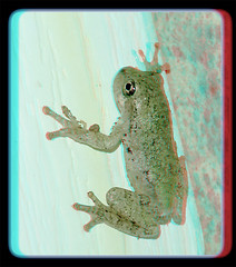 Eastern or Cope's Gray Treefrog Young 1 - Anaglyph 3D (DarkOnus) Tags: copes treefrog gray eastern pennsylvania buckscounty huawei mate 8 cell phone 3d stereogram stereography stereo darkonus closeup macro anaglyph