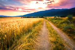 Road to Serenity (sfabisuk) Tags: road sunset field bulgaria shipka