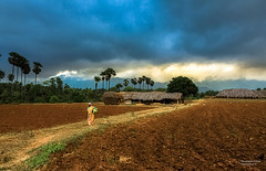 A Typical Village Scene (Navaneeth Kishor) Tags: canon canon450 kichus navaneethkishor ooty