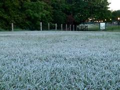 (IgorCamacho) Tags: morning winter brazil ice gelo nature paran brasil sunrise landscape frost natureza frosty paisagem southern inverno amanhecer manh winterscape geada invernal