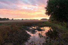 Morgen nach dem Regen (webpinsel) Tags: felder morgenstimmung dernekamp landschaft sonnenaufgang sommer natur wolken münsterland