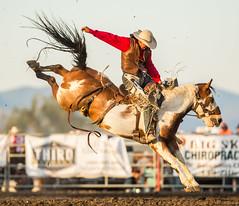 Last Chance Stampede (jamesridle) Tags: rodeo helena montana lastchancestampede summer bronc riding