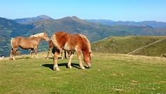 Caminho Francs de Santiago (vmribeiro.net) Tags: caminho frances santiago camino way jacques saint james jean pied port franca france roncesvalles roncesvales spain espana espanha cavalos horses wild rota route napoleo napoleon trail