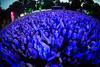 2016_SebastianSchofield_Sunday (32) (Larmer Tree) Tags: sebastianschofield 2016 sunday crowd audience cheer clap favourite handsintheair