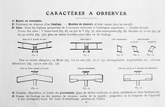 1917. Silhouettes d'avions classes par analogie__08 (foot-passenger) Tags: 1917    franais aviation bnf bibliothquenationaledefrance  wwi gallica