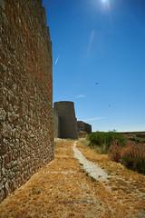 Uruea's Wall (I) (Modesto Vega) Tags: uruea wall muralla field campo camposdecastilla wake estela nikon nikond600 fullframe cardo thistle bird pajaro sun sol sunray rayodesol path senda