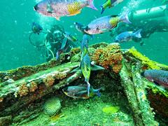 Bow (Oblivious Dude) Tags: grenada veronica veronical wreck wreckdiving bow diver divers scuba scubadiving scubadiver fish s95 canonpowershots95 canons95 wpdc38 underwater ocean coral