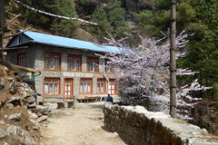 Benkar-Guesthouse (Alfesto) Tags: trekking nepal cheplung jorsalle khumbaarea himalaya