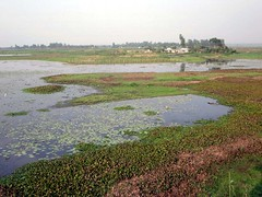 Hail Haor Wetland Sanctuary (D-Stanley) Tags: srimongal bangladesh waterbirds