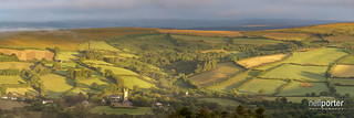 widecombe Gold