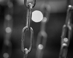 stronger together or imprisoned? - 232/366 (auntneecey) Tags: 366the2016edition 3662016 day232366 19aug16 chain link monochrome mono chained