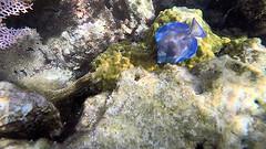 Sea Life (MyFWCmedia) Tags: fish coralreef snorkel fwc myfwc myfwccom wildlife florida floridafishandwildlife conservation johnpennekamp keylargo flkeys floridakeys floridastateparks johnpennekampcoralreefstatepark park pennekamp lovefl