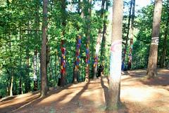 BOSQUE DE OMA (50) (cle68) Tags: bolunzulu kortezubi oma basondo santimamie bosque paisaje senderismo euskadi bizkaia urdaibai pinturas