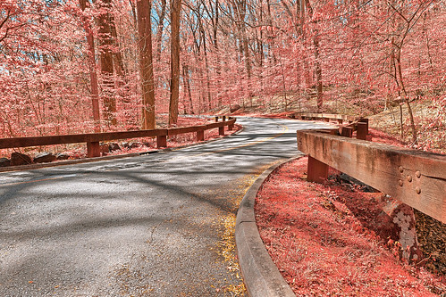 Opalescent Forest Road - HDR