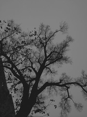 (lonesome) tree on a gloomy day. (belle.fleur) Tags: tree january gloomyday 2015 gri darkandgloomy lonesometree coldjanuaryday janar januarymood alidajolie somedaysaregloomy diteftohtpaosemeshummendime pemevetmuarnnjdittzymt