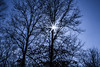 In the Sky (marylea) Tags: hudsonmillsmetropark explore explored feb27 2015 hudsonmills park trees starburst sun sunburst silhouette sky tree washtenawcounty michigan woods parks sunny clear clearskies star sunbeam