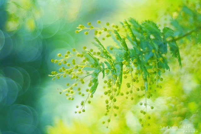 flowers * 花
