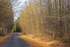 Spotlight (schreibtnix on' n off) Tags: trees light nature forest germany deutschland licht natur structures wald bume schatten rennweg strukturen bergischgladbach lightspot knigsforst olympuse5 schreibtnix schhadow