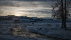 Silence and Solitude (dbushue) Tags: winter snow mountains nature clouds creek river landscape evening nikon scenery stream dusk january steam valley yellowstonenationalpark wyoming ynp 2014 sunsent lamarvalley dailynaturetnc14 dailynaturetnc15