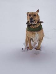 Buddy in the Snow (FC) (jamesclinich) Tags: dog snow detail texas tx clarity olympus omd topaz adjust em10 denoise littlefieldtx