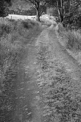 (kuuan) Tags: leica bw minolta path australia tasmania mf f2 40mm 240 rokkor minoltamrokkor mrokkorf240mm f240mm minoltamrokkorf240mm