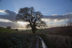 UnRavelling Fast 57/365 (rmrayner) Tags: road winter sky tree sunshine rural landscape countryside lane day57 365project 57365 devonlanewithwintertree afterjamesravilious
