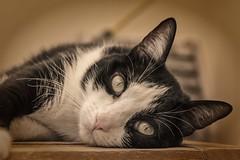 Tola relajada en la terraza. (Egg2704) Tags: naturaleza cats animal cat gatos gato felinos animales animalia tola wewanttobefree egg2704
