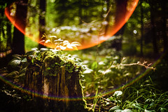 Green Paradise (mr_kuchen) Tags: leica trees light summer plants sun color tree green nature forest licht spectrum bokeh outdoor sommer lensflare trunk grn sonne wald bume moos baumstamm