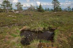 Trou d'eau (Samuel Raison) Tags: lake nature finland landscape lac paysage finlande jarvi tourbire