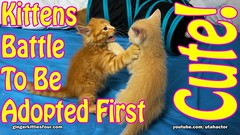 Kittens Battle To Be Adopted First (youtube.com/utahactor) Tags: pink red orange pet cute animals yellow cat fun nose ginger blog video feline funny lol sony tabby watch adorable like kittens follow whiskers gato website tabbies share camcorder helios 4k viral youtube friendsofzeusandphoebe bestmeow gingerkittiesfour