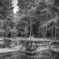 Parc du Chateau de Courances (Philippe Vieux-Jeanton) Tags: chateaudecourances parc park bassin pond forest essonne iledefrance france hdr samyang12mmf20 summer
