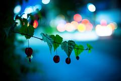 Drooping (moaan) Tags: kobe hyogo japan jp plant flower flowering flora abution tyroleanlump evening eventide twilight light taililight signal trafficlight fujifilmxe2 xf35mmf14r