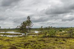Dunika mire (`TOMS`) Tags: sky tree green nature water grass clouds 35mm nikon outdoor ngc latvia trail nikkor taka mire liepaja purva d3200 dunika f18g afsdxnikkor35mmf18g