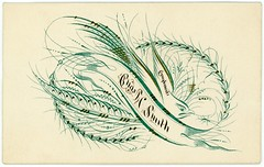 Charles SmithOrnamental Pensmanship on a Calling Card (Alan Mays) Tags: ephemera callingcards visitingcards namecards names cards paper printed charlessmith charles chassmith smith men birds insects animals plants handlettering lettering drawing handdrawn flourishedbirds flourishes flourished flourishing scrolls ornamentalpensmanship penmanship handwriting writing calligraphy banners compliments green brown black victorian 19thcentury nineteenthcentury antique old vintage