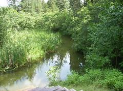 Itasca State Park - Minnesota (jaygannett) Tags: minnesota itasca
