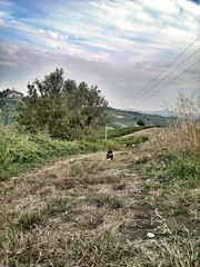 Wait for me! (Eilis88) Tags: dog run nature hills vineyards oltrepo lombardy italy summer evening field green landscape
