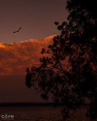Gone to the birds #2 (core_personal_training) Tags: bird australia nsw centralcoast longjetty jetty lake water tree sunset sun clouds nikon nikond3300 dslr nikkor1855 sky landscape