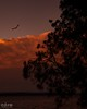 Gone to the birds #2 (core_personal_training) Tags: bird australia nsw centralcoast longjetty jetty lake water tree sunset sun clouds nikon nikond3300 dslr nikkor1855 sky landscape