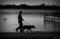 Walking The Dog. Windsor, ON. (Pat86) Tags: photooftheday windsor detroitriver man dog walking black white streetphotography