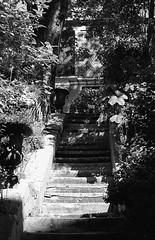 Stairs in the garden (Amelien (Fr)) Tags: 147 18 2016 400 50f18 50mm amn analog argentique believeinfilm capturedonrealfilm dilutione epson f5 film hc110 kodak nikkor nikon pellicule trix blackandwhite bw filmisnotdead homescanned monochrome nb noiretblanc v550