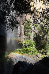 Rainbow falls (igomak) Tags: springbrooknationalpark warriecircuit bushwalking rainbowfalls waterfall