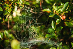 Bold Coast, ME (rsieber82) Tags: maine bold coast hiking backpacking camping cutler me eastcoast coastal atlantic ocean wilderness outdoors nature canon 5d mkii helios 442 58mm f2 trees spider web insect dew