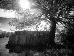 Into the sun (AJ Mitchell) Tags: limogne lot quercy neolithic bronzeage megalith intothesun neoltico nolithique