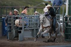 Tak_CPRA_2016-5208 (takahashi.blair) Tags: coachtak rodeo blairtakahashitakahashiblaircoachtakblairtakahashi pincher creek barrel racing bronc rope bareback steer bullriding