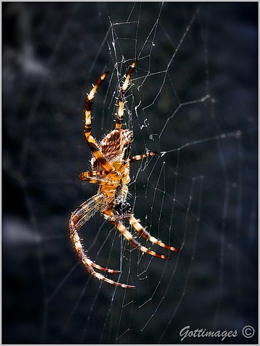 SPIDER by Philip Gott (3)