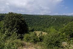20140630 - Sannicandro Garganico - Pozzatina - 002 (orsoyoghurt) Tags: daunia gargano orsoyoghurt alberi sannicandrogarganico doline