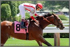 Practical Joke breaks his maiden (Spruceton Spook) Tags: saratoga horses horseracing maidens practicaljoke