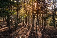 Bosco incantato (Emanuele Di Marco) Tags: autunno bosco 2014 ceppo